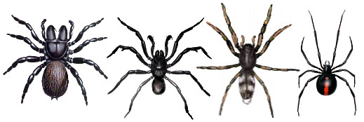 poisonous-spiders-examples